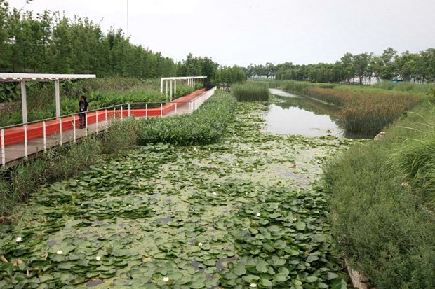 Идеи для города: Парк на месте свалки вТяньцзине. Изображение № 7.