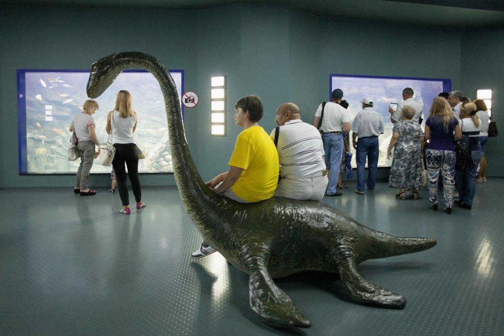 «Главные здесь — косатки, но самые милые — моржи»: На ВДНХ открылся океанариум. Изображение № 1.
