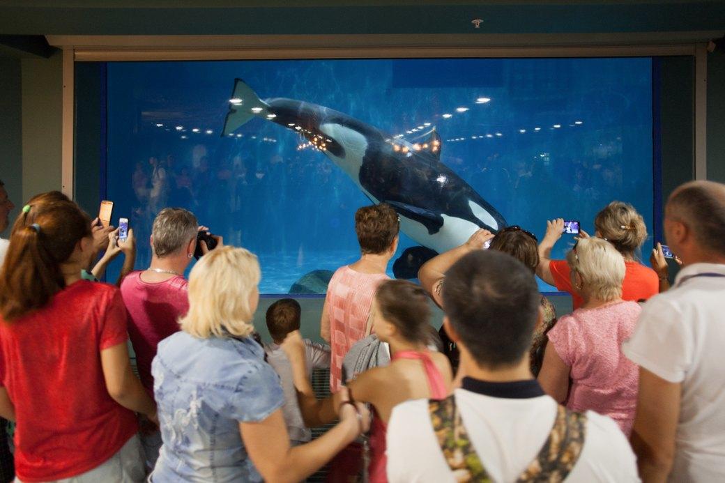 «Главные здесь — косатки, но самые милые — моржи»: На ВДНХ открылся океанариум. Изображение № 8.