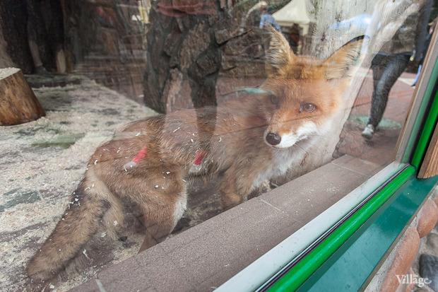 Как живёт и меняется Ленинградский зоопарк . Изображение № 25.