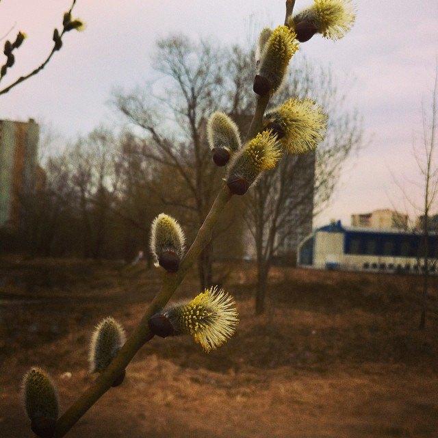 Весна в Москве в снимках Instagram. Изображение № 5.