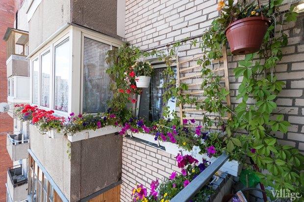 Где посадки: Что горожане выращивают на балконах иподоконниках. Изображение № 52.