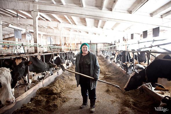 Репортаж: Как делают молочные продукты в «Лосево». Изображение № 18.