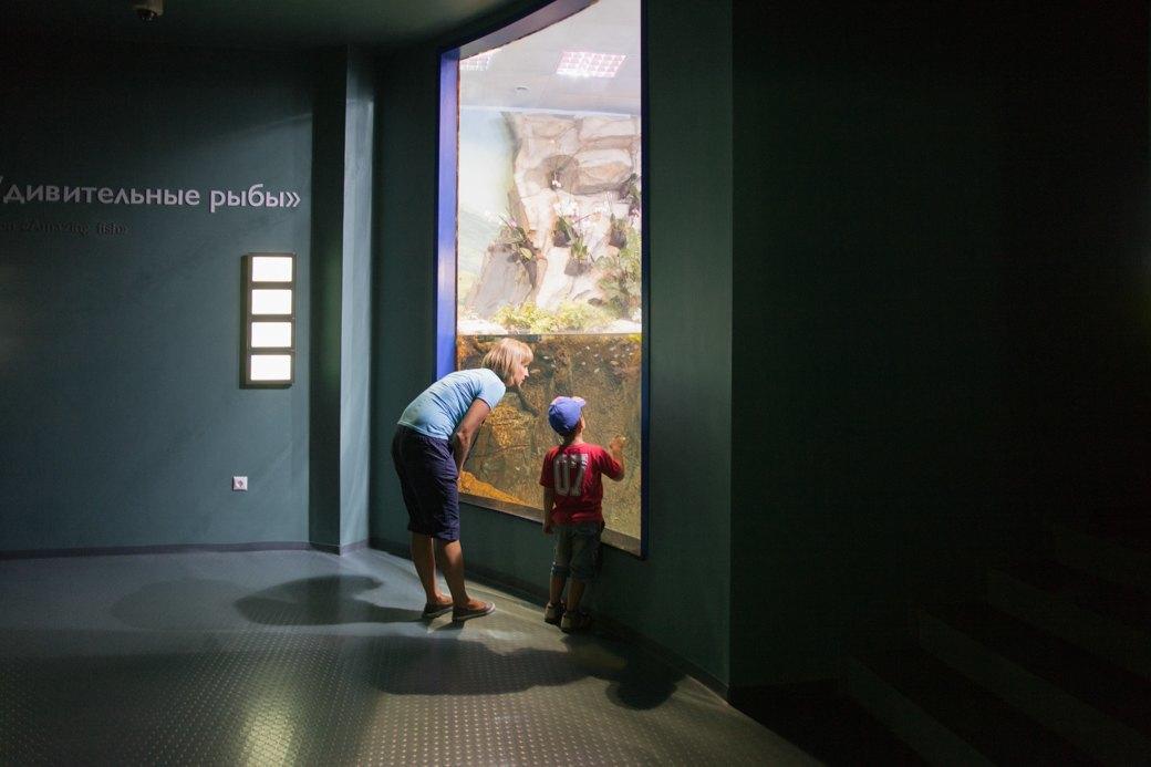 «Главные здесь — косатки, но самые милые — моржи»: На ВДНХ открылся океанариум. Изображение № 2.