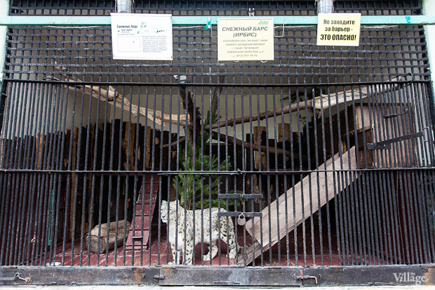 Как живёт и меняется Ленинградский зоопарк . Изображение № 32.