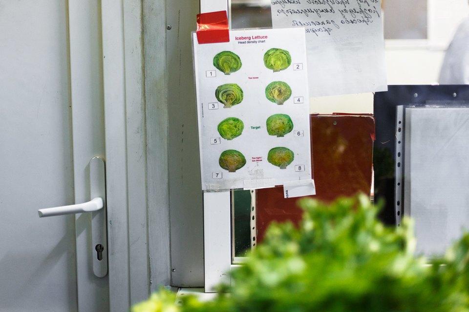 Производственный процесс: Как делают салаты для McDonald's. Изображение № 10.