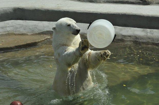 Купание медведей вмосковском зоопарке. Изображение № 4.
