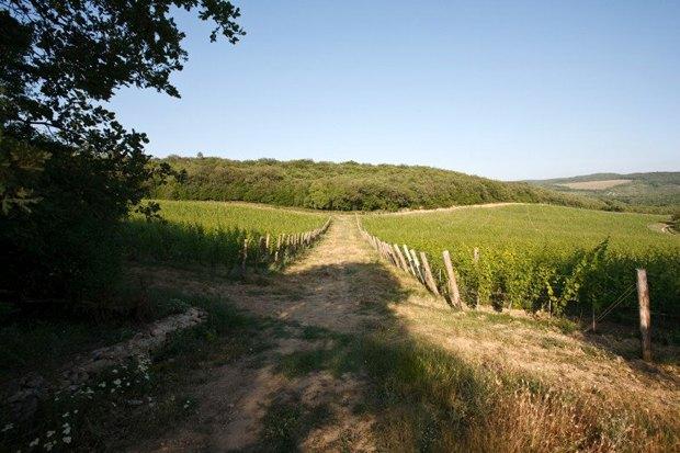 Что такое органическое, биодинамическое иприродное вино. Изображение № 2.