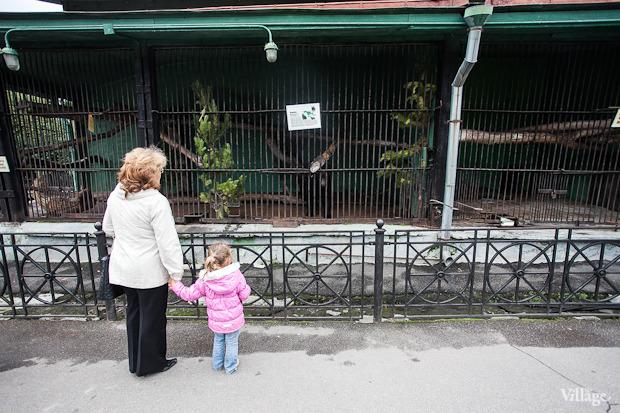 Как живёт и меняется Ленинградский зоопарк . Изображение № 7.