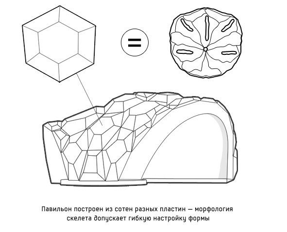 Дизайн от природы: Стекло-паутина и павильон — морской еж в Германии. Изображение № 9.