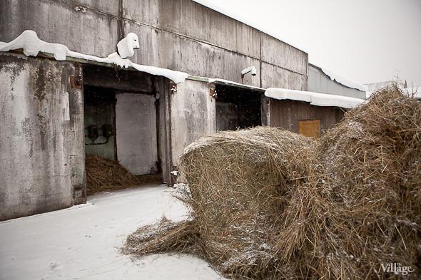 Запас сена. Изображение № 15.