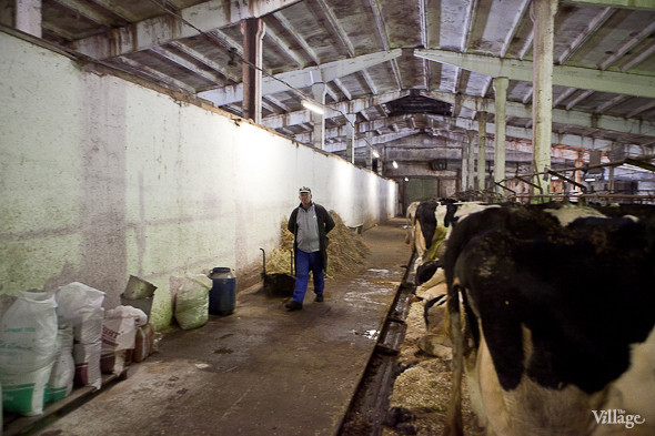 Репортаж: Как делают молочные продукты в «Лосево». Изображение № 6.
