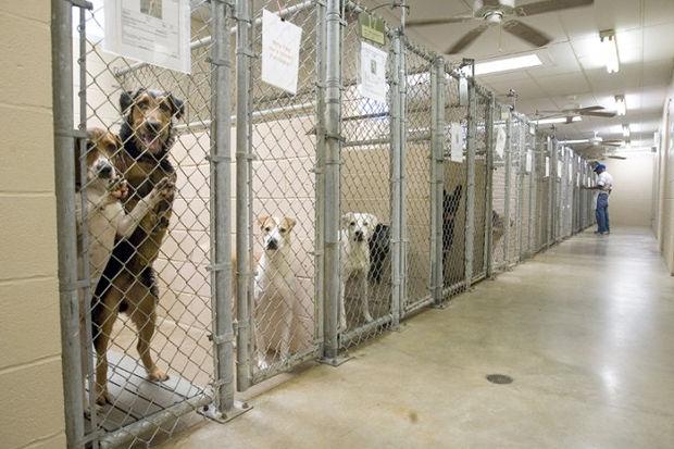 Иностранный опыт: Что делать сбездомными собаками. Изображение № 12.