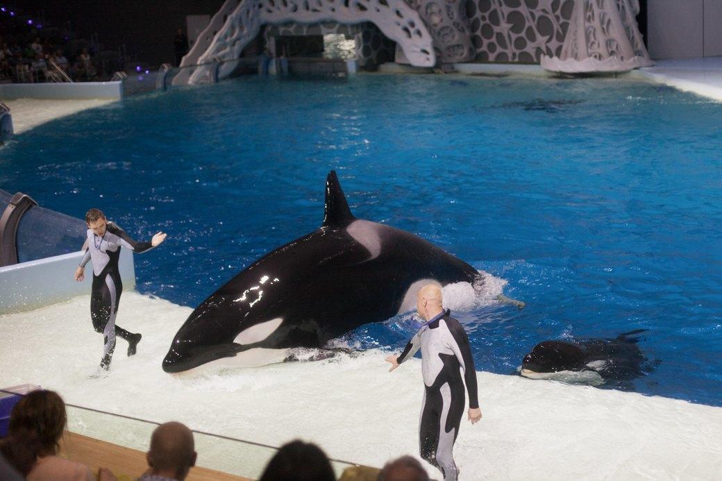 «Главные здесь — косатки, но самые милые — моржи»: На ВДНХ открылся океанариум. Изображение № 20.