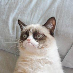 События недели: GusGus, Matisyahu и эволюция котиков. Изображение № 5.