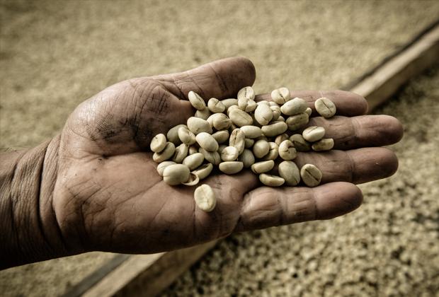 Кофе и перфекционизм: Как получить правильный эспрессо. Изображение № 10.