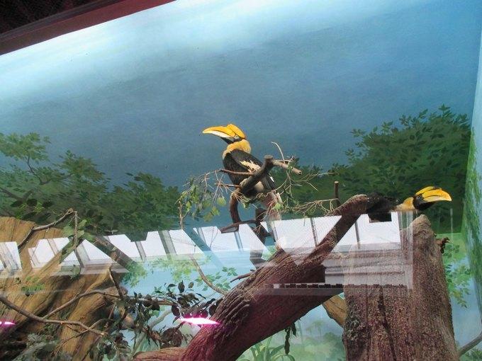 Зоозащитники просят прокуратуру проверить зоопарк вТЦ«Рио» . Изображение № 1.