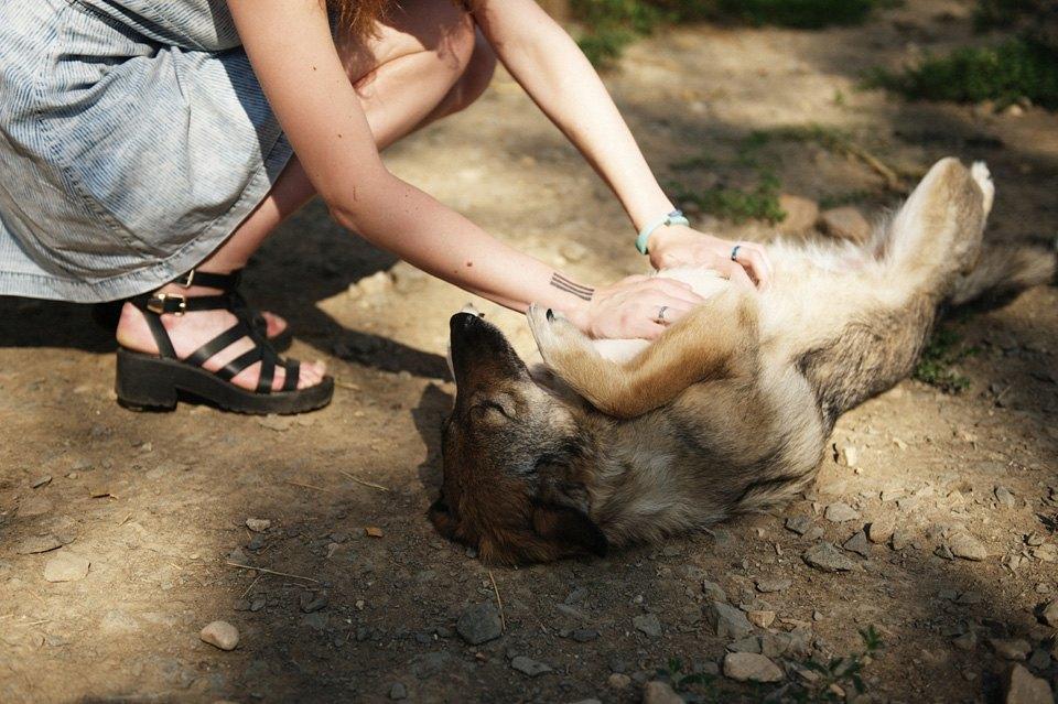 Как помочь бездомным собакам найти дом. Изображение № 3.