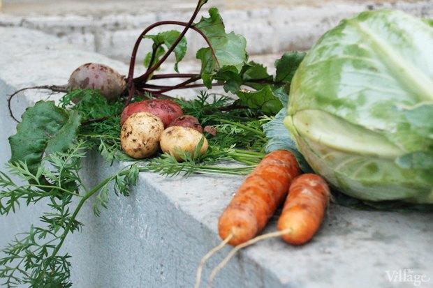 На районе: Как разбить огород и выращивать бесплатные овощи для соседей в Шушарах. Изображение № 11.