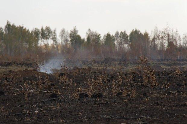 Greenpeace опричинах октябрьского смога вМоскве. Изображение № 4.