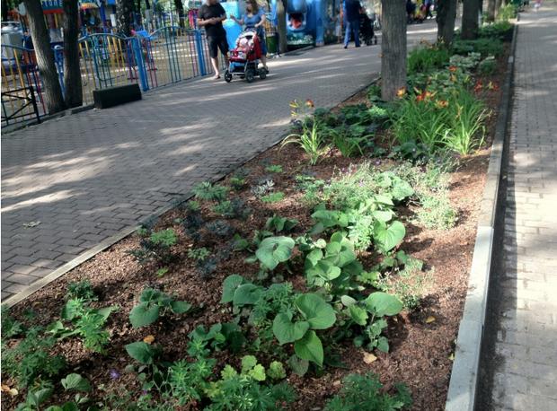 Теневой цветник в Бабушкинском парке. Изображение № 15.