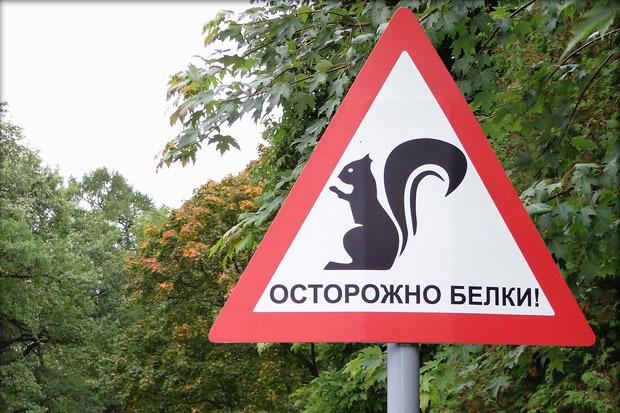 Знак «Осторожно: белки!» в ЦПКиО имени Кирова. Изображение № 1.