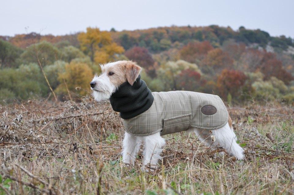 Как архитектор стала шить одежду для собак. Изображение № 6.