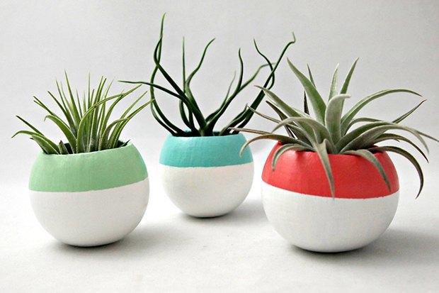 Где покупать комнатные растения икашпо. Изображение № 4.