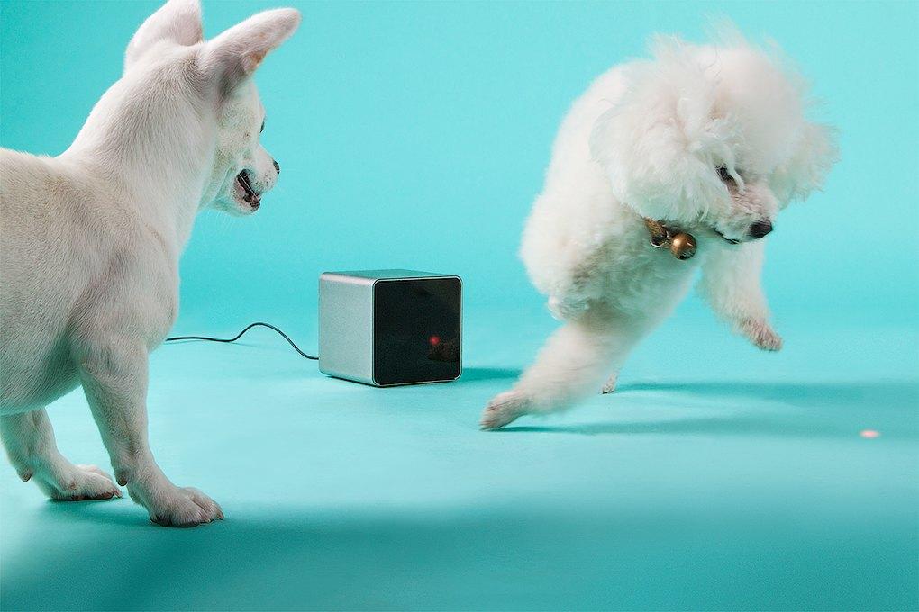 Petcube: Гаджет для общения с животными на расстоянии. Изображение № 5.