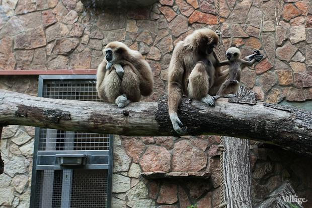 Как живёт и меняется Ленинградский зоопарк . Изображение № 44.