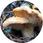 Где, когда икак собирать грибы . Изображение № 8.
