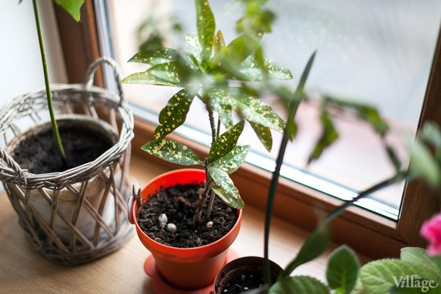 Где посадки: Что горожане выращивают на балконах иподоконниках. Изображение № 68.