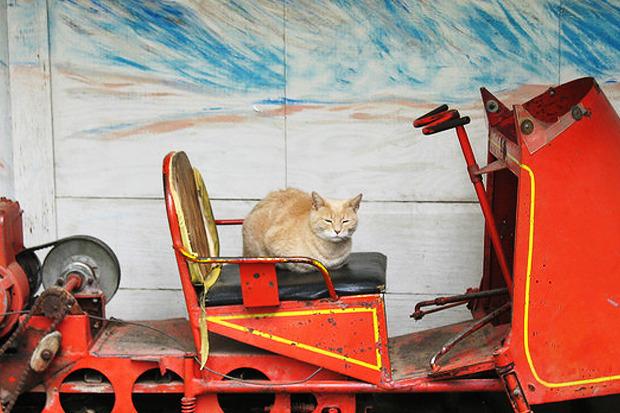 Идеи для города: Кот на посту мэра. Изображение № 18.