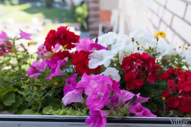 Где посадки: Что горожане выращивают на балконах иподоконниках. Изображение № 60.