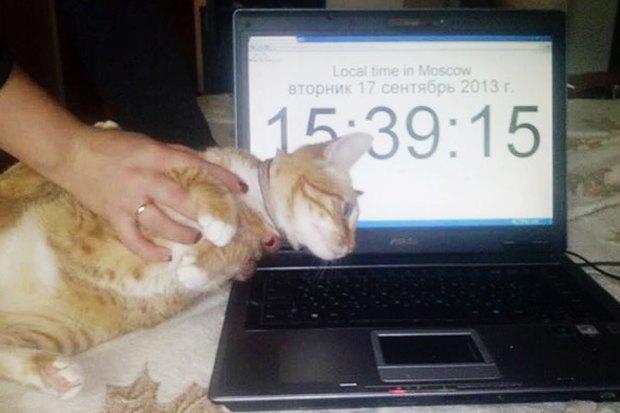 Кража кота заполмиллиона иещё 7громких происшествий сживотными. Изображение № 4.