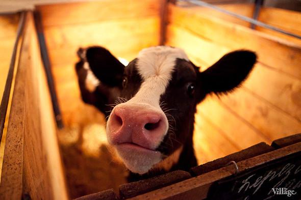 Репортаж: Как делают молочные продукты в «Лосево». Изображение № 5.
