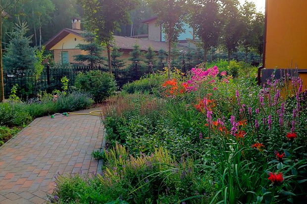 Такие флоксы и лилейники появятся в саду Баумана. Изображение № 19.