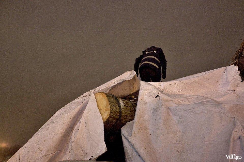 Фоторепортаж: Как устанавливали главную петербургскую ёлку. Изображение № 11.