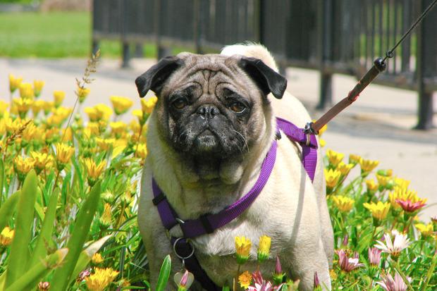 Иностранный опыт: Что делать сбездомными собаками. Изображение № 24.