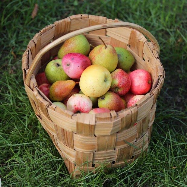 День яблок, отреставрированный «Брат», джазовый фестиваль вСестрорецке иещё 13событий выходных. Изображение № 8.