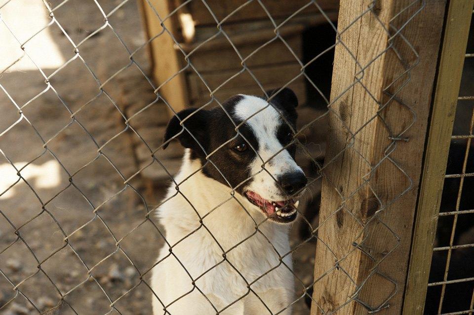 Как помочь бездомным собакам найти дом. Изображение № 7.