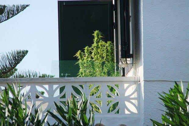 Чехи, испанцы, голландцы иамериканцы — о жизни после легализации марихуаны. Изображение № 7.