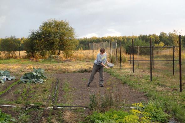 Участок, на котором Ирина и Петр выращивают травы. Фотографии из личного архива. Изображение № 11.