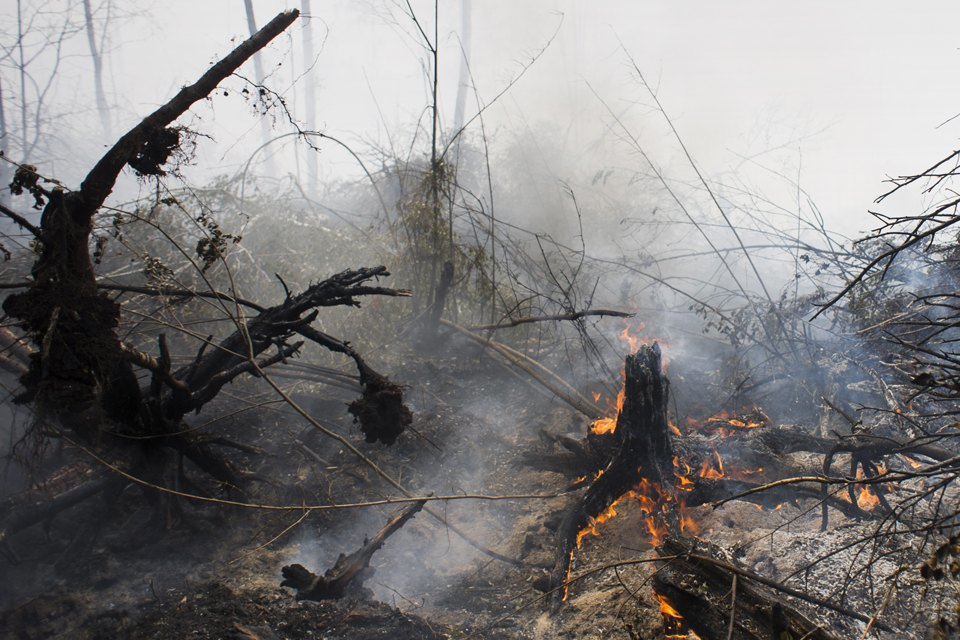 Как тушат лесные пожары вТверской области. Изображение № 3.