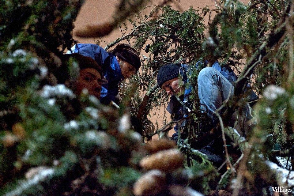 Фоторепортаж: Как устанавливали главную петербургскую ёлку. Изображение № 24.