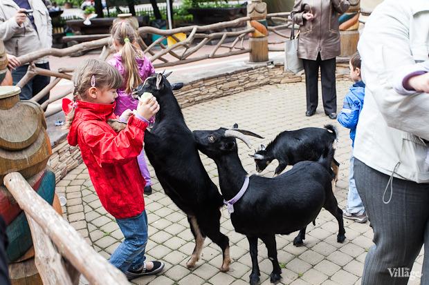 Как живёт и меняется Ленинградский зоопарк . Изображение № 34.
