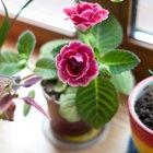 Где посадки: Что горожане выращивают на балконах иподоконниках. Изображение № 80.