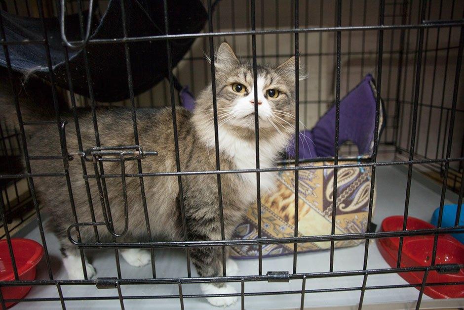 Коты иты: Как помочь брошенным животным. Изображение № 11.