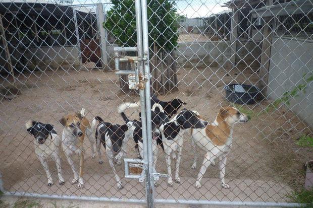Иностранный опыт: Что делать сбездомными собаками. Изображение № 14.