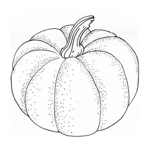 Сезон молодых овощей: Тыква. Изображение № 1.
